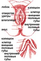 chto-spryatano-pod-kapyushonom-klitora